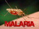 FG announces plan to borrow $300m to eliminate malaria