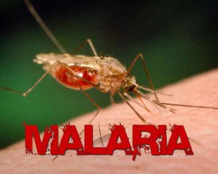 FG announces plan to borrow $300m to eliminate malaria