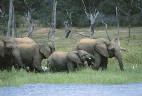 Zimbabwe denies plan to export live elephants to other countries